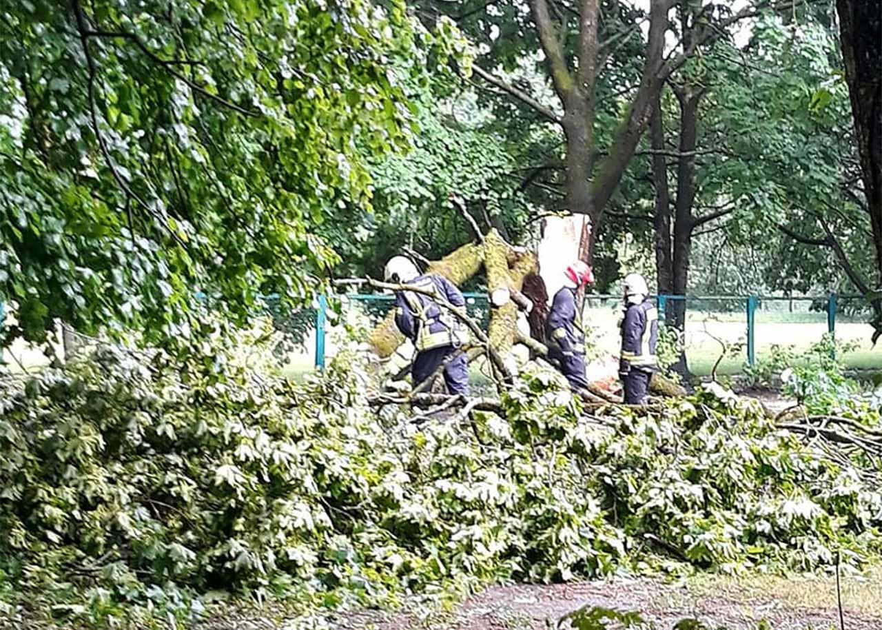Glābēji novāc zibens nogāzto koku Juglā