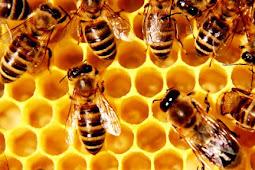 Untuk Apa Lebah Menghasilkan Madu?