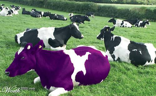 Purple cow seth godin