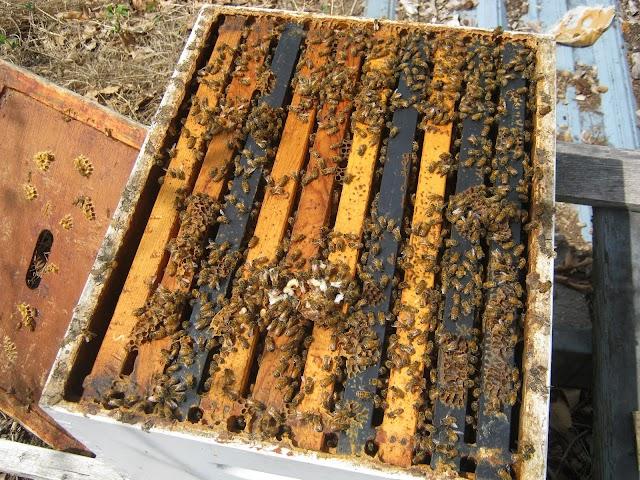 Αποθήκευση πλαισίων με μέλι και γύρη