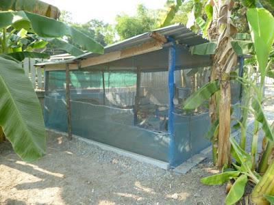 Hühnerstall Thailand