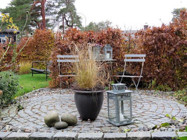 Høstfarger i vinterhagen, det går mot vår. Høstfarger i sirkelen. Furulunden IMG_0040