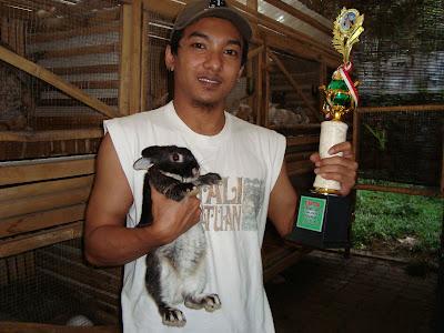 juara 3 kontes kelinci mini
