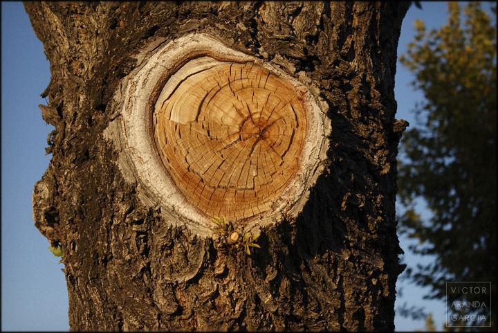 fotografia,cordoba,tronco,naturaleza,arbol,corteza