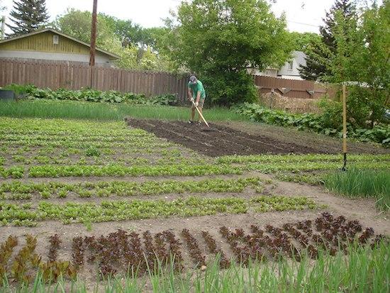 Starting A Vegetable Garden Backyards