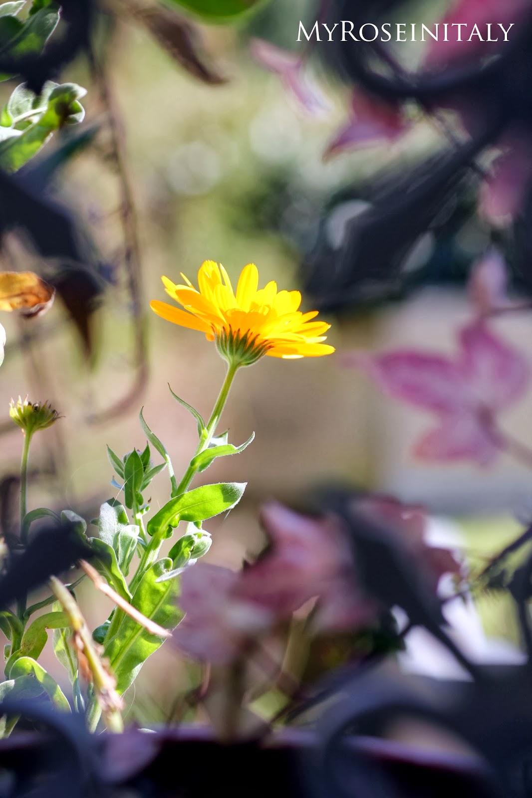 Immagini di giardini fioriti for Piccoli giardini fioriti