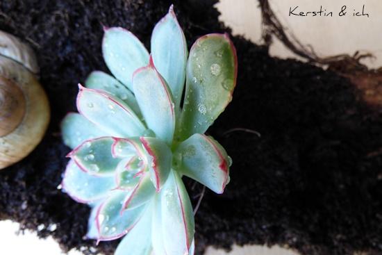 Töpfe Übertopf Blumentopf Upcycling Sukkulenten