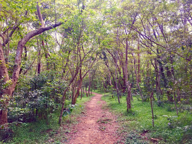 Forest path on the Lantau Trail from Mui Wo to Pui O, Hong Kong