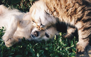 Amicizia cane gatto foto