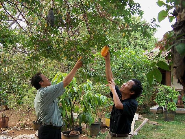 Usaha Sampingan di Bidang Pertanian yang Potensial