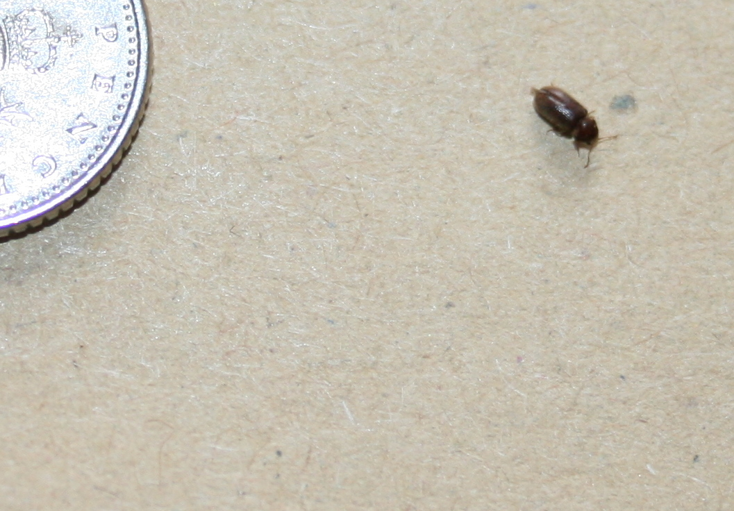 Bugs In Uk Homes