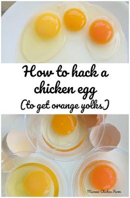 farm fresh eggs, orange yolks