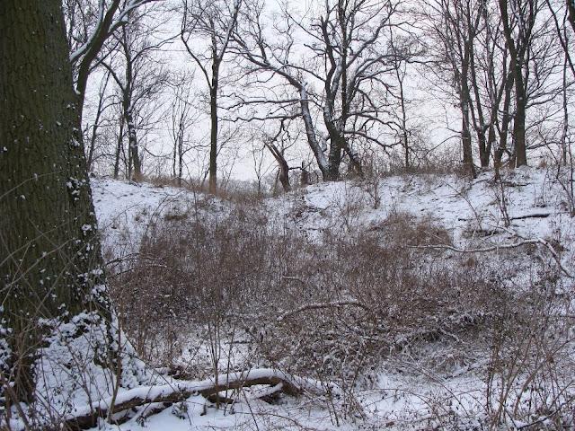 Wczesnośredniowieczne grodzisko pierścieniowate we wsi Zalesie