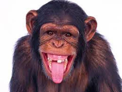 Macacos me mordam 5d6e183f18483