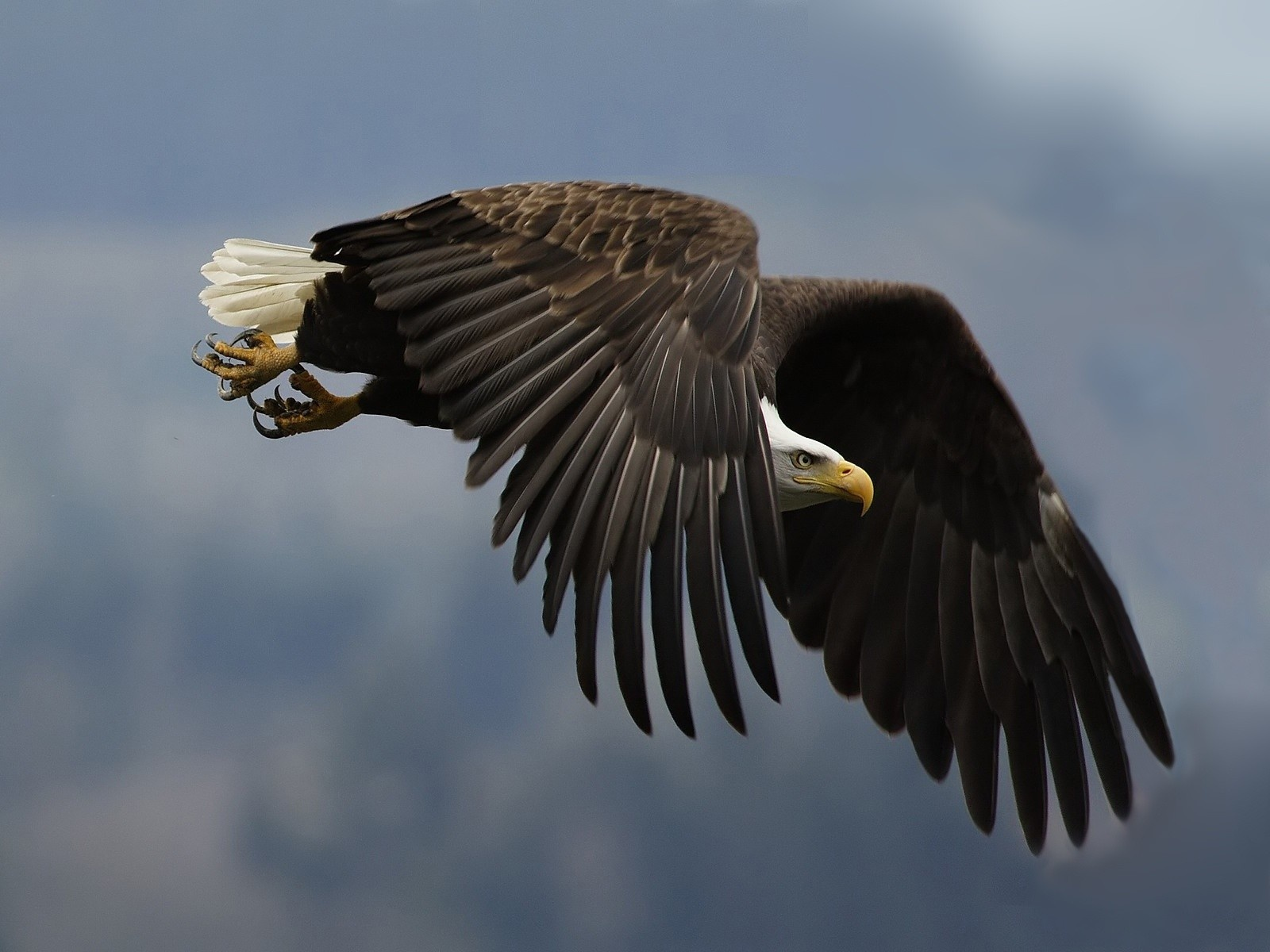 the biggest animals kingdom eagle eagles are large birds of prey ...