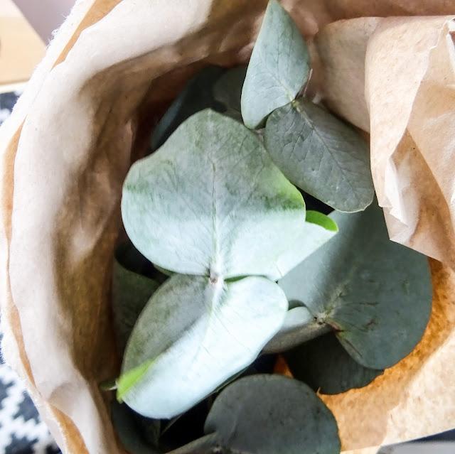 Sisustaminen, viherkasvit, eukalyptus,