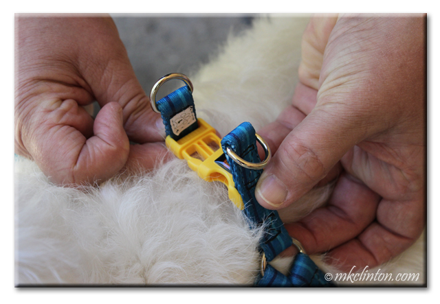 Hands demonstrating the snap and leash loops for PrideBites step in harness