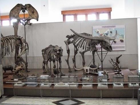 Wisata Pendidikan dan Museum Geologi di Bandung