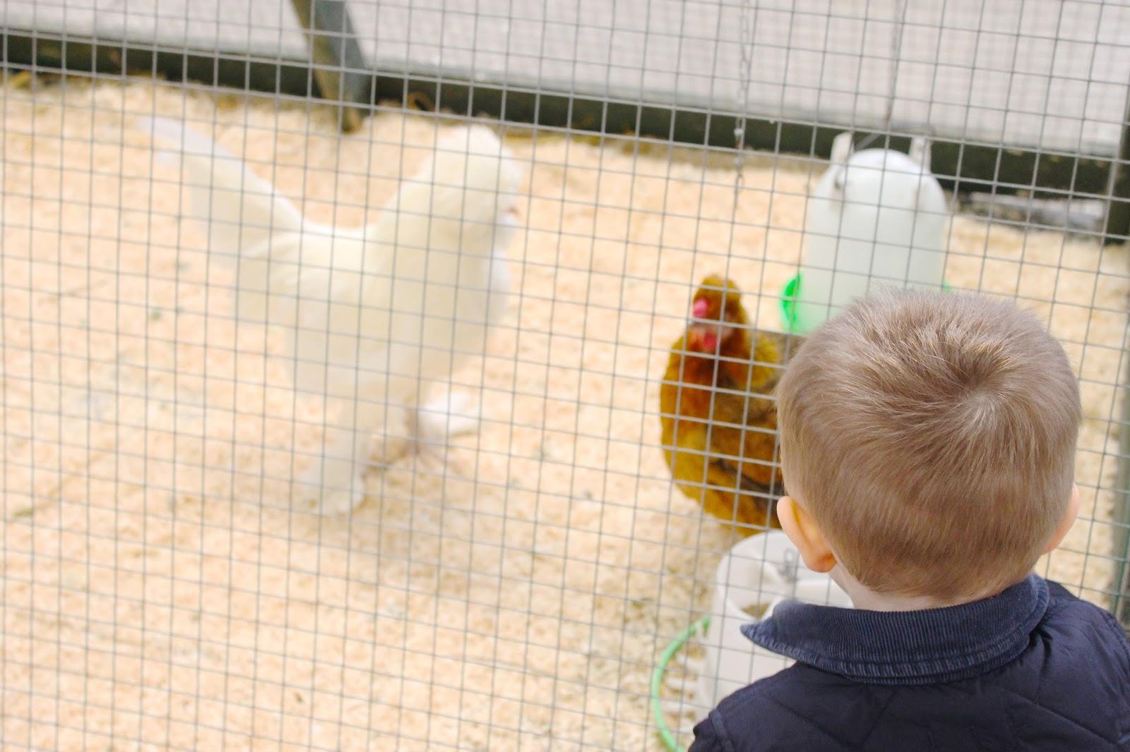 folly farm review, folly farm wales