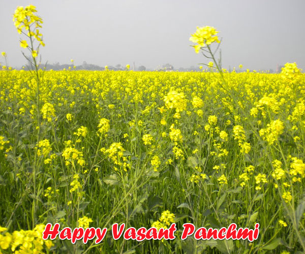 happy basant panchami,basant panchami,vasant panchami,happy basant panchami 2019,basant panchami 2019,vasant panchami 2019,basant panchami 2018,happy basant panchami 2018,basant panchami 2019 wallpapers images,happy basant panchami 2019 wishes greetings sms quotes,basant panchami 2019 date,vasant panchami whatsapp status video,happy basant panchmi,basant panchami video,2019 vasant panchami date and time