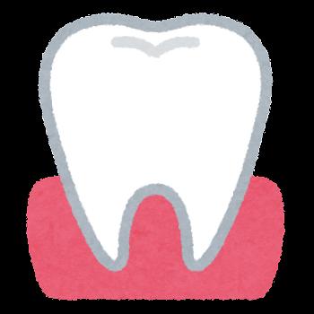 歯と歯茎のイラスト