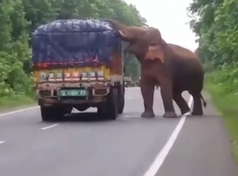 When This Adorable Elephant Saw A Potato Truck Go By, It Knew Exactly What To Do