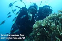 wisatawan diving di laut karimun