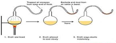 Percobaan Louis Pasteur menggunakan labu leher angsa