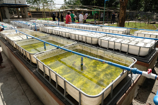 aquaponic farm clark pampanga