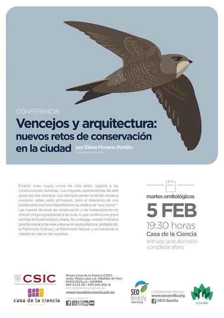 Conferencia: Vencejos y arquitectura: nuevos retos de conservación para la ciudad. Por Elena Moreno Portillo 5 de Febrero 2019. Grupo Local SEO-Sevilla.