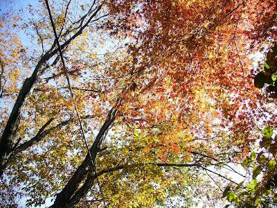 大阪府交野市 星のブランコ・ハイキング 紅葉