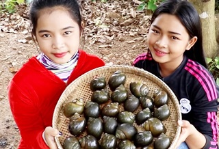 Awesome Cooking Spicy Grilled Snail Delicious Recipe – Cook Snails Recipes – Village Food Factoy