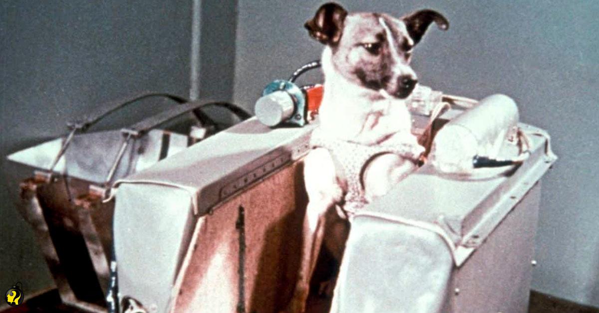 Há 60 anos, a cadela Laika era enviada para a morte certa no espaço