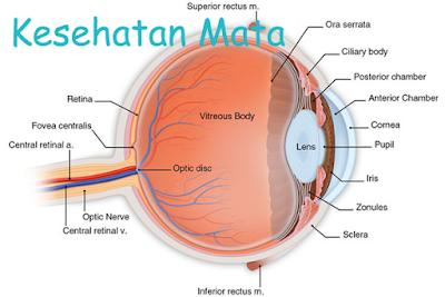 Gerakan Senam Mata Untuk Menyehatkan Mata Anda