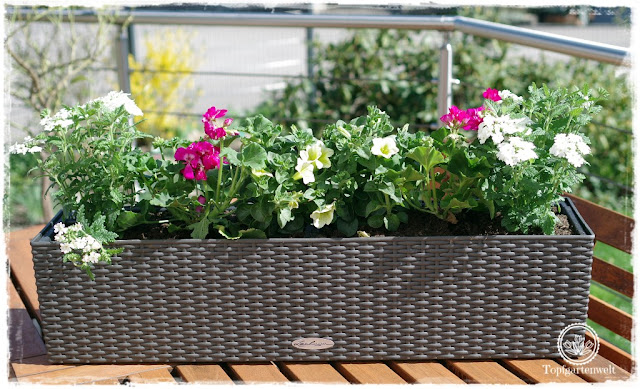 Gartenblog Topfgartenwelt Balkonblumen 2018: Pflanzvorschlag Pelargonien Geranien Surfinien Verbenen