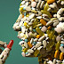Η υπερβιταμίνωση βλάπτει σοβαρά την υγεία μας...