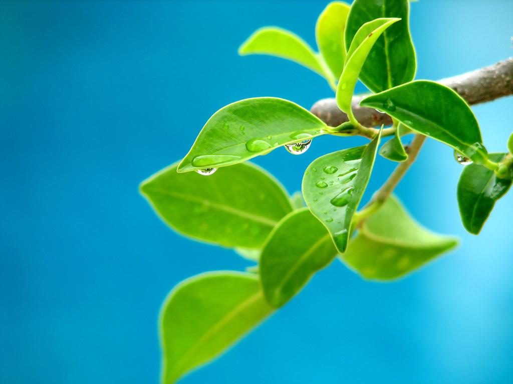 Manfaat Matahari Sebagai Pemberi Warna Hijau Pada Tumbuhan