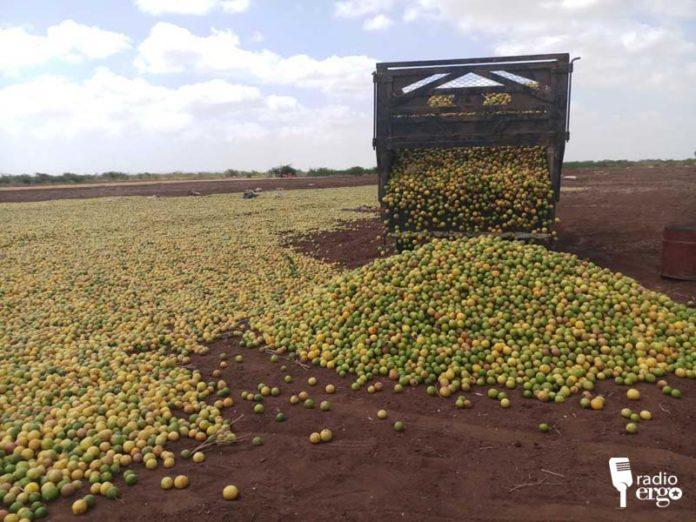 الليمون والسمسم الصومالي يجدون أسواق تصدير جديدة الى تركيا