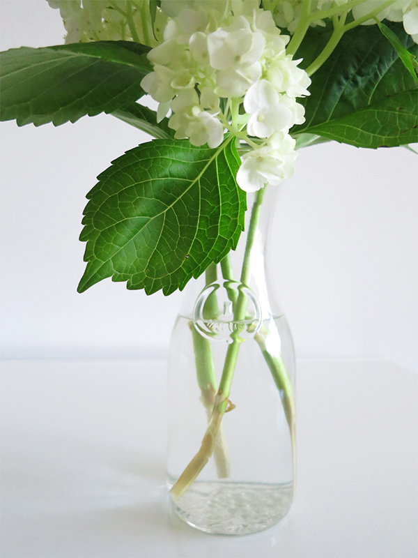 Give hydrangea stems a deep diagonal cut to expose as much of the inner stem to water as possible; this helps the blooms last longer.
