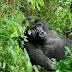 Национальный парк Уганды признан самым красивым в мире по версии CNN