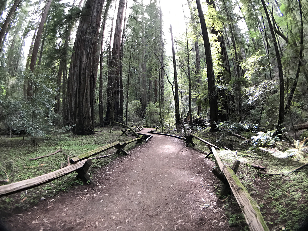 Trail inside Armstrong Woods