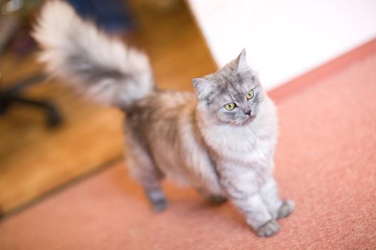 Na Drapaku Blog O Kotach Kot Załatwia Się Do Doniczek