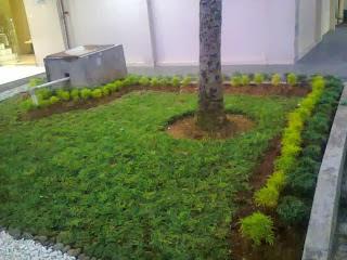 perawatan-tanaman-hias-brokoli.jpg