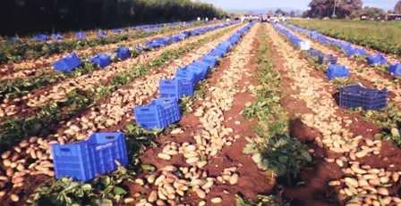 Το φύτεμα και η περιποίηση της πατάτας