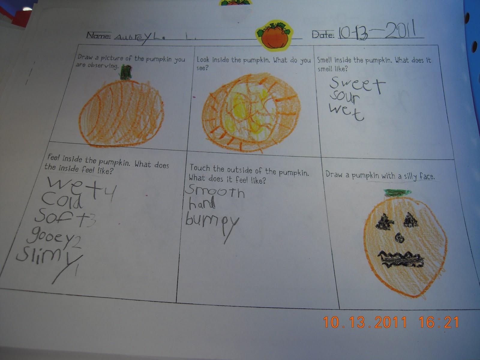 Ms Heinrich S Kindergarten Corner Using Our Senses To Observe A Pumpkin