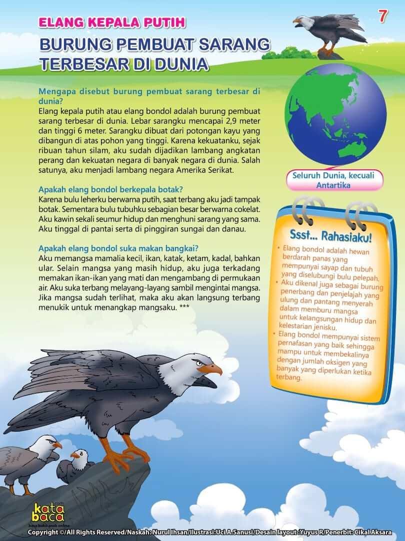 Burung Elang kepala Putih - Burung Pembuat Sarang Terbesar di Dunia