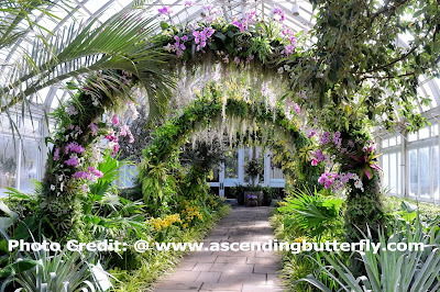 Replication of The Famed Arches of Singapore Botanic Gardens, National Orchid Garden, Enid Haupt Conservatory, The New York Botanical Gardens, Orchid, Orchids, Flowers