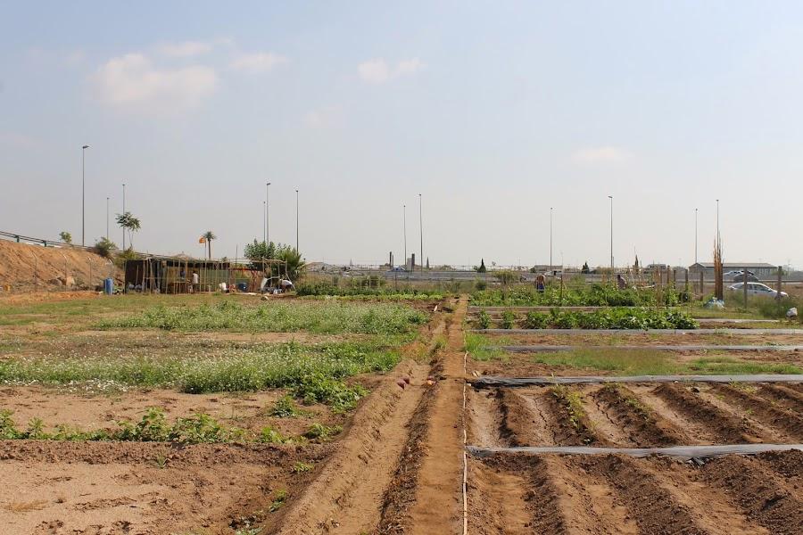 parcelas urban cultive