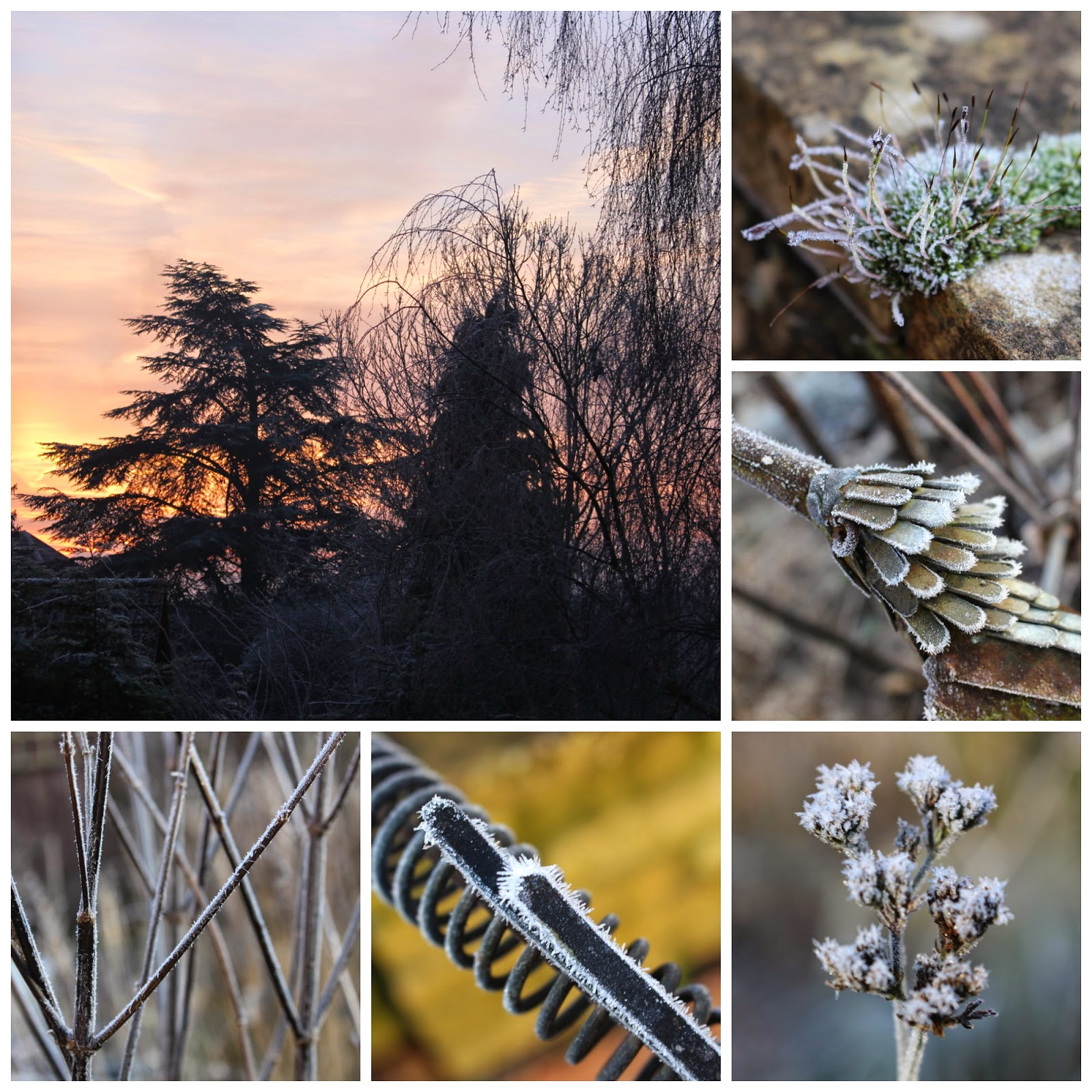 A second collage of hoar frost pictures from my garden