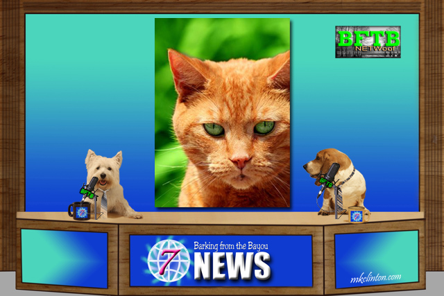 BFTB NETWoof News reports on a cat returned after 11 years thanks to microchip